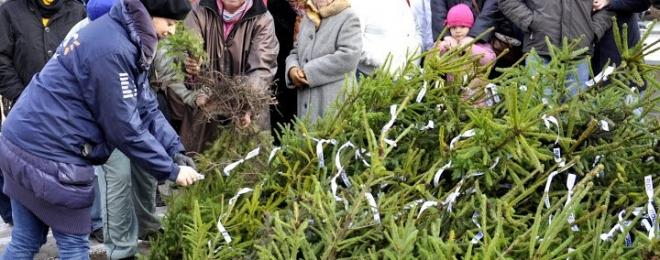 Rozdajemy sadzonki drzew wspólnie z Radiem RDC – Zapraszamy